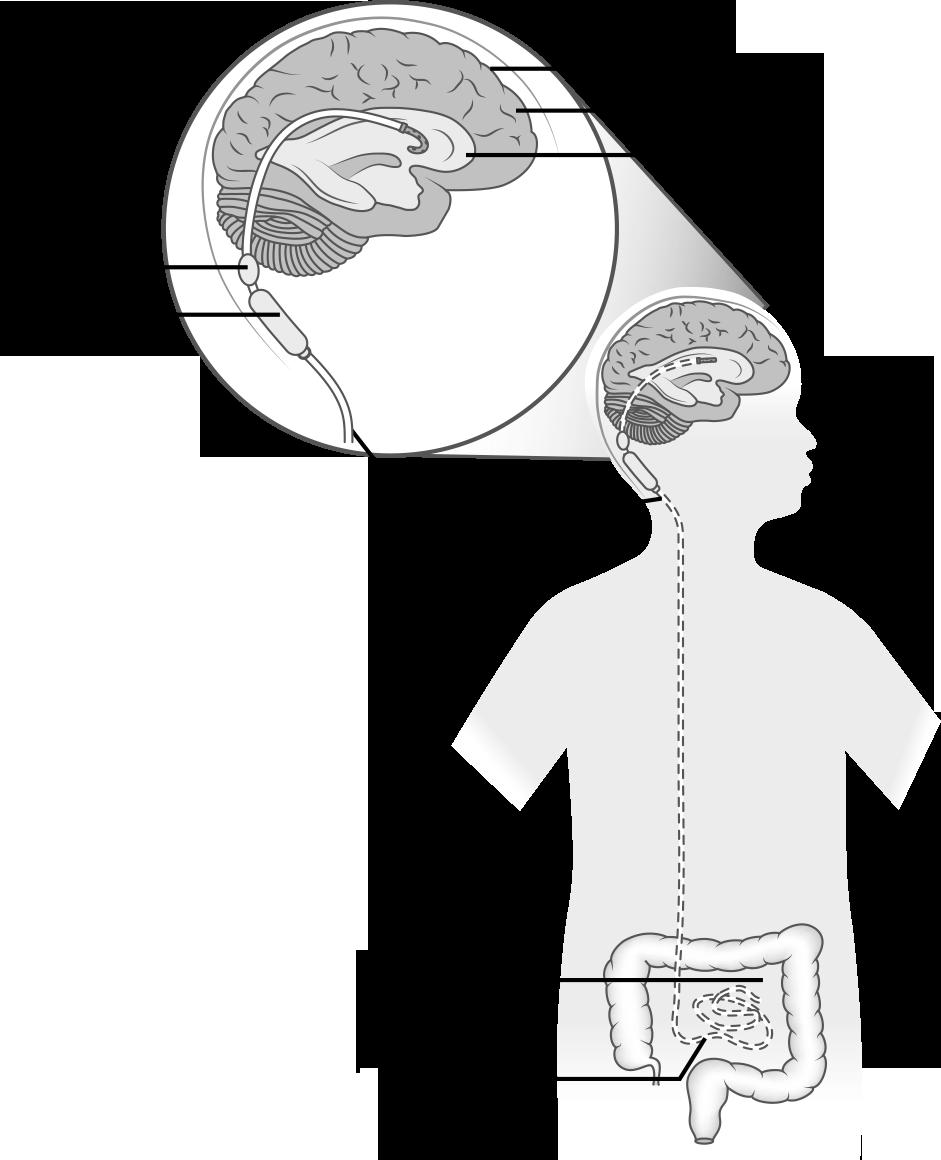 Neurologic System Springer Publishing