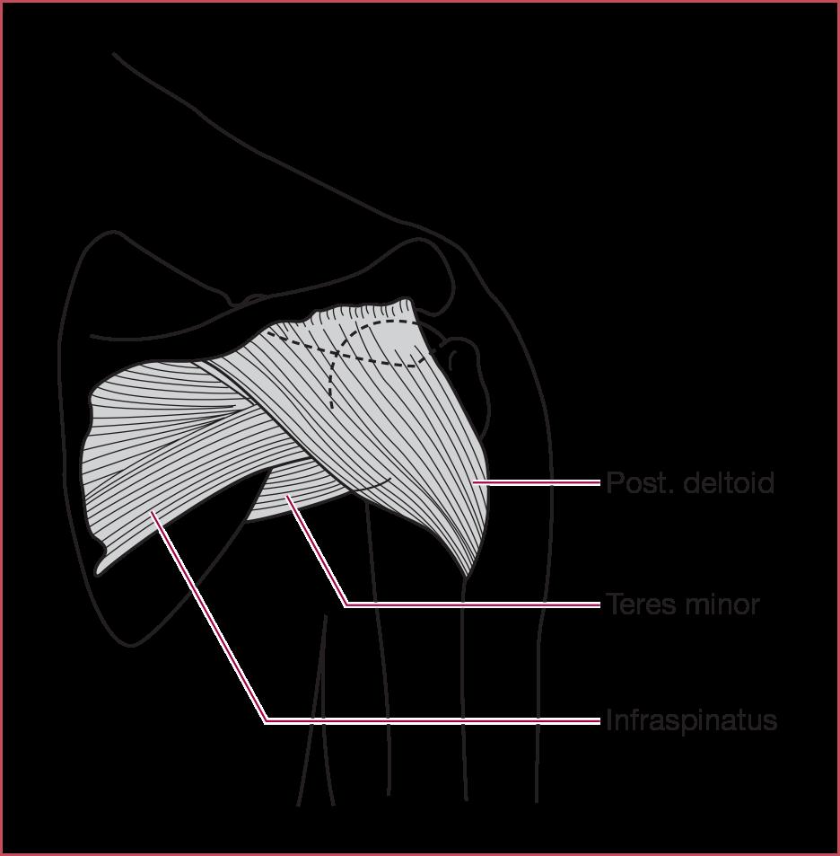 Musculoskeletal Medicine Springer Publishing