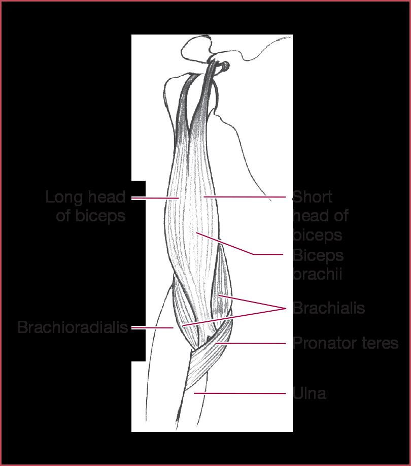 gyógynövényzet ízületi fájdalmak esetén ízületi fájdalom urológus